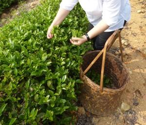 2014第三届国际茶文化年度研讨会制岩茶