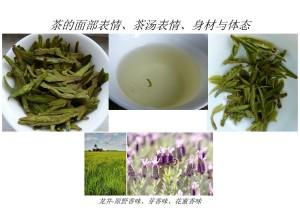 现代茶道思想龙井-原野香味芽香味花蜜香味